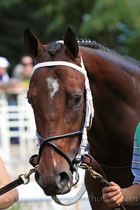 Dominus (Smart Strike) before a maiden race at Belmont Park 9/18/10 JH.