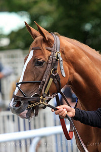 Hessonite (Freud) before a maiden race at Belmont Park 9/18/10 JH.