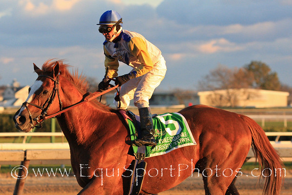 Jersey Town (Speightstown) and jockey Cornelio Velasquez return after winning the Cigar Mile Handicap at Aqueduct 11/27/10 JH.