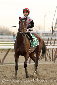 To Honor and Serve (Bernardini) and jockey Jose Lezcano win the Gr I Cigar Mile at Aqueduct 11/26/11 for trainer Bill Mott and owner Live Oak Plantation.