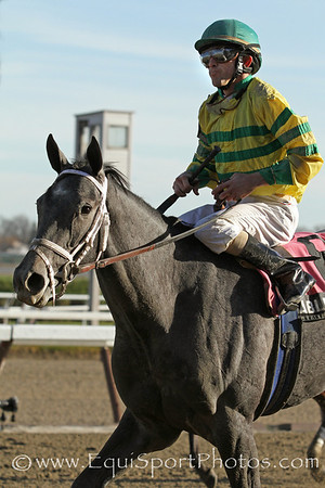 Disposablepleasure (Giacomo) and jockey Ramon Dominguez win the Gr II Demoiselle Stakes at Aqueduct 11/26/11 for trainer Todd Pletcher and owner Glencrest Farm.
