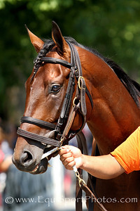 Craving Carats (Street Sense) before a MSW at Saratoga Racecourse 8/4/12. Trainer: Dale Romans. Owner: Donegal Racing