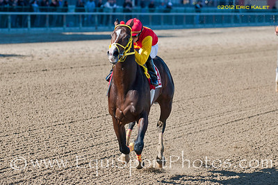 Trinniberg (Teuflesberg), wins the 2012 GIII Bay Shore Stakes at Aqueduct Racetrack in New York.