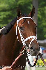 Palace Malice (Curlin) before a MSW at Saratoga Racecourse 8/4/12. Trainer: Todd Pletcher. Owner: Dogwood Stable