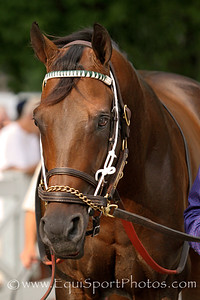 Ron the Greek (Full Mandate) before the Whitney Invitational (Gr I) at Saratoga Racecourse 8/4/12. Trainer: Bill Mott. Owner: Brous Stable