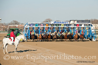 Horses break from the gate in the 6th race at Aqueduct Racetrack in Ozone Park, New York on January 7, 2012.