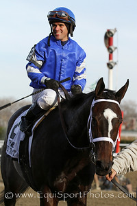 Wedding Toast (Street Sense) and jockey Javier Castellano win the Comely (Gr III) at Aqueduct Racetrack 11/30/13. Trainer: Kiaran McLaughlin. Owner: Godolphin Stable