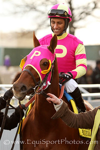 Groupie Doll (Bowman's Band) and jockey Rajiv Maragh before the Cigar Mile (Gr I) at Aqueduct Racetrack 11/30/13. Trainer: William Bradley. Owner: Whisper Hill Farm.