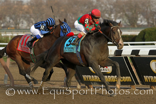 Flat Out (Flatter) and jockey Junior Alvarado win the Cigar Mile (Gr I) at Aqueduct Racetrack 11/30/13. Trainer: Bill Mott. Owner: Preston Stables