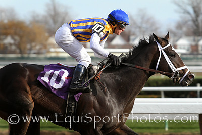 Surfing USA and jockey Javier Castellano win a MSW at Aqueduct Racetrack 11/30/13. Trainer: Todd Pletcher. Owner: George Bolton & Stonestreet Stables