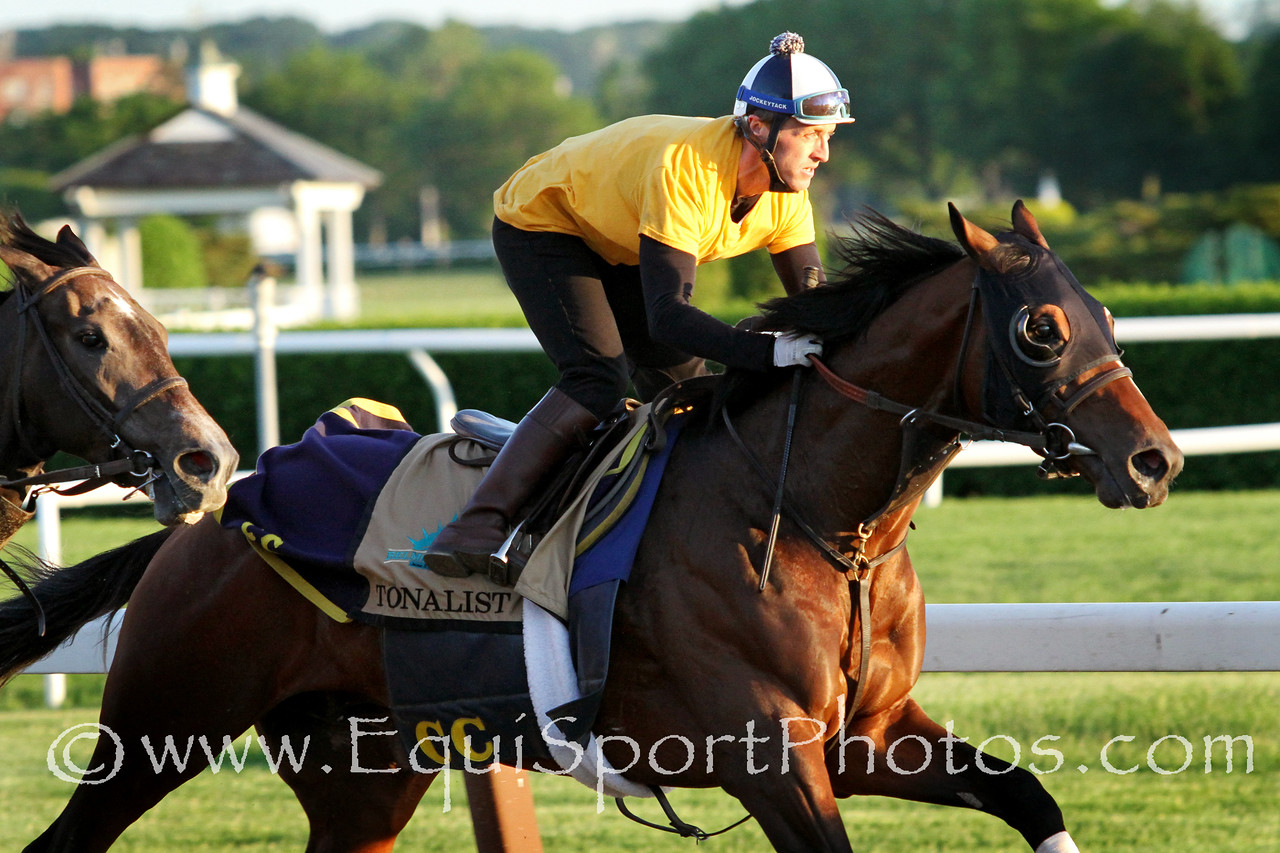 Tonalist (Tapit) trains for the Belmont Stakes (Gr I) at Belmont Park 5/31/14. Trainer: Christophe Clement. Owner: Robert S. Evans