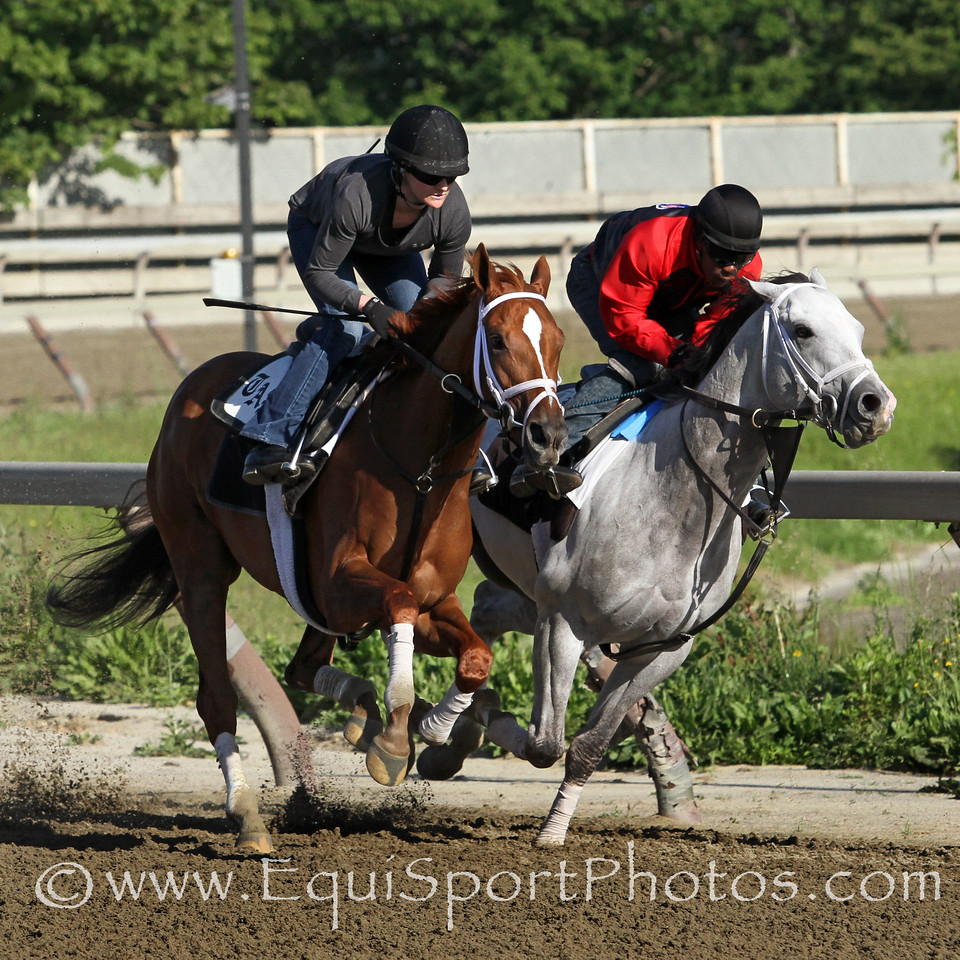 Princess of Sylmar (Majestic Warrior) (outside) trains for the Ogden Phipps (Gr I) at Belmont Park 6/1/14. Trainer: Todd Pletcher. Owner: King of Prussia Stable