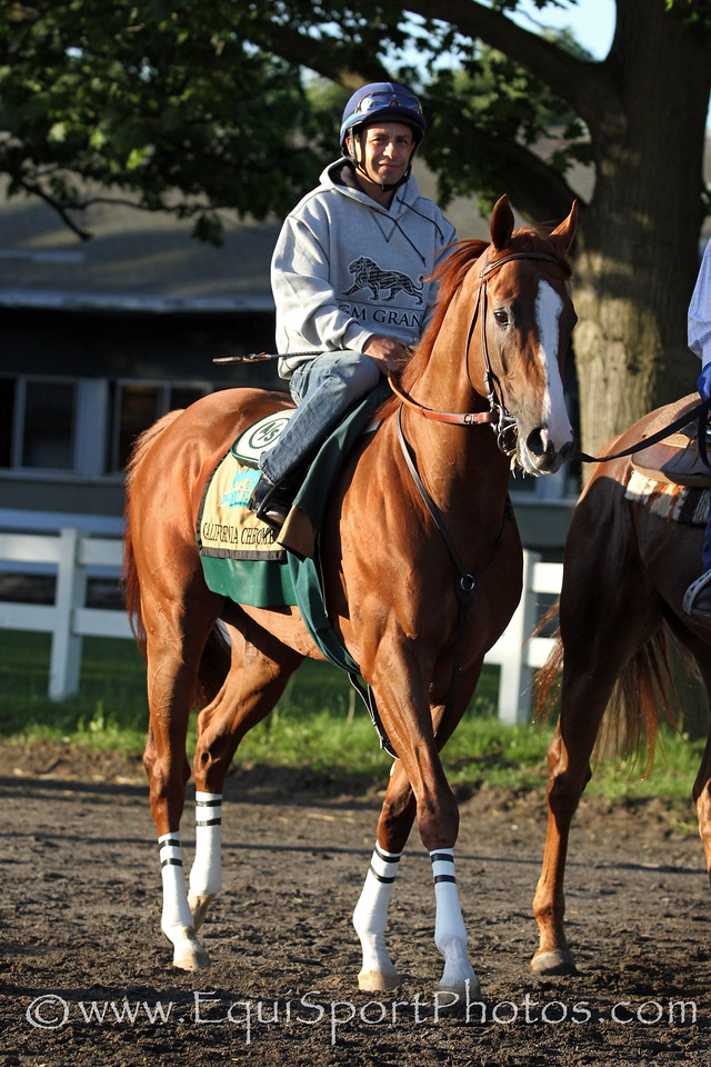 California Chrome (Lucky Pulpit) and jockey Victor Espinoza train for the Belmont Stakes (Gr I) at Belmont Park 5/31/14. Trainer: Art Sherman. Owner: Steven Coburn & Perry Martin