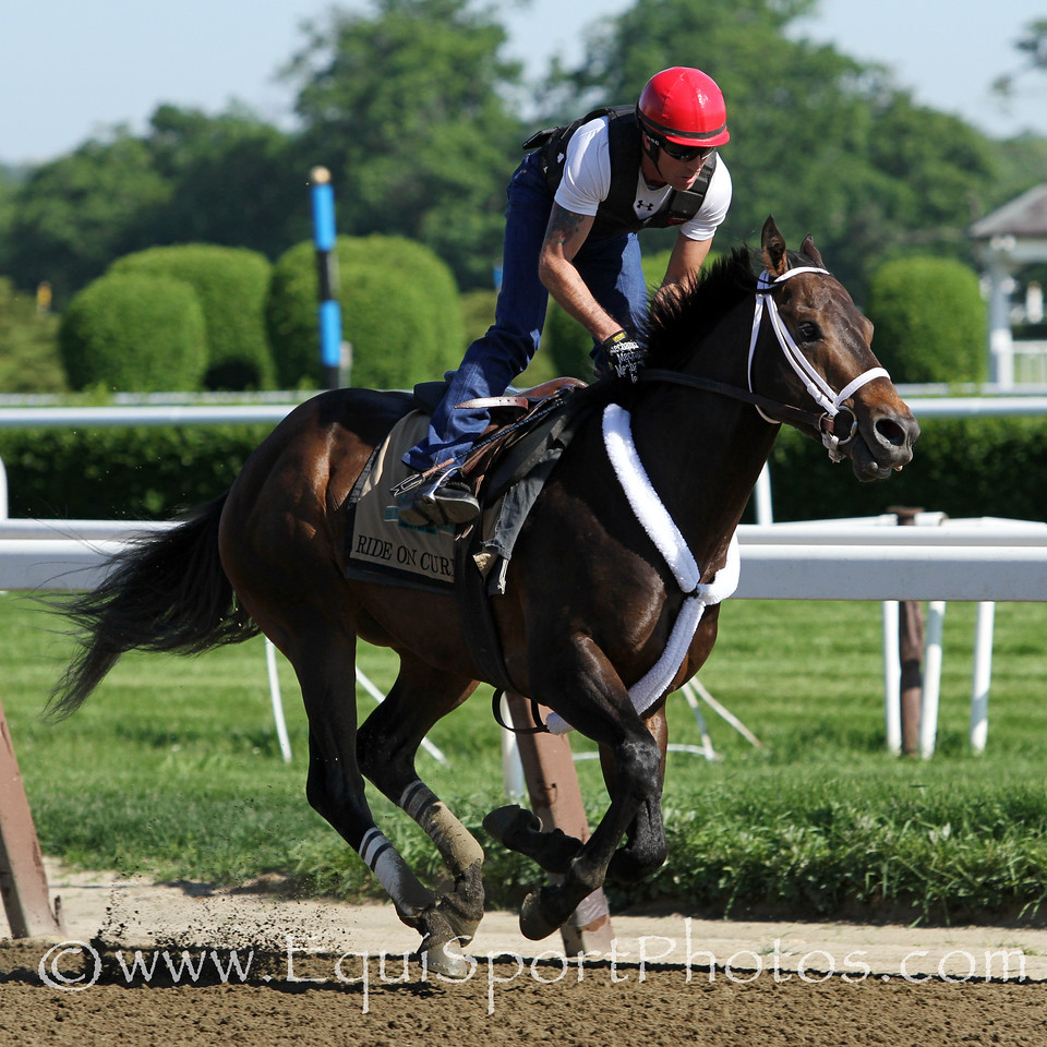 Ride On Curlin (Curlin) trains for the Belmont Stakes (Gr I) at Belmont Park 6/1/14. Trainer: William Gowan. Owner: Daniel J Dougherty