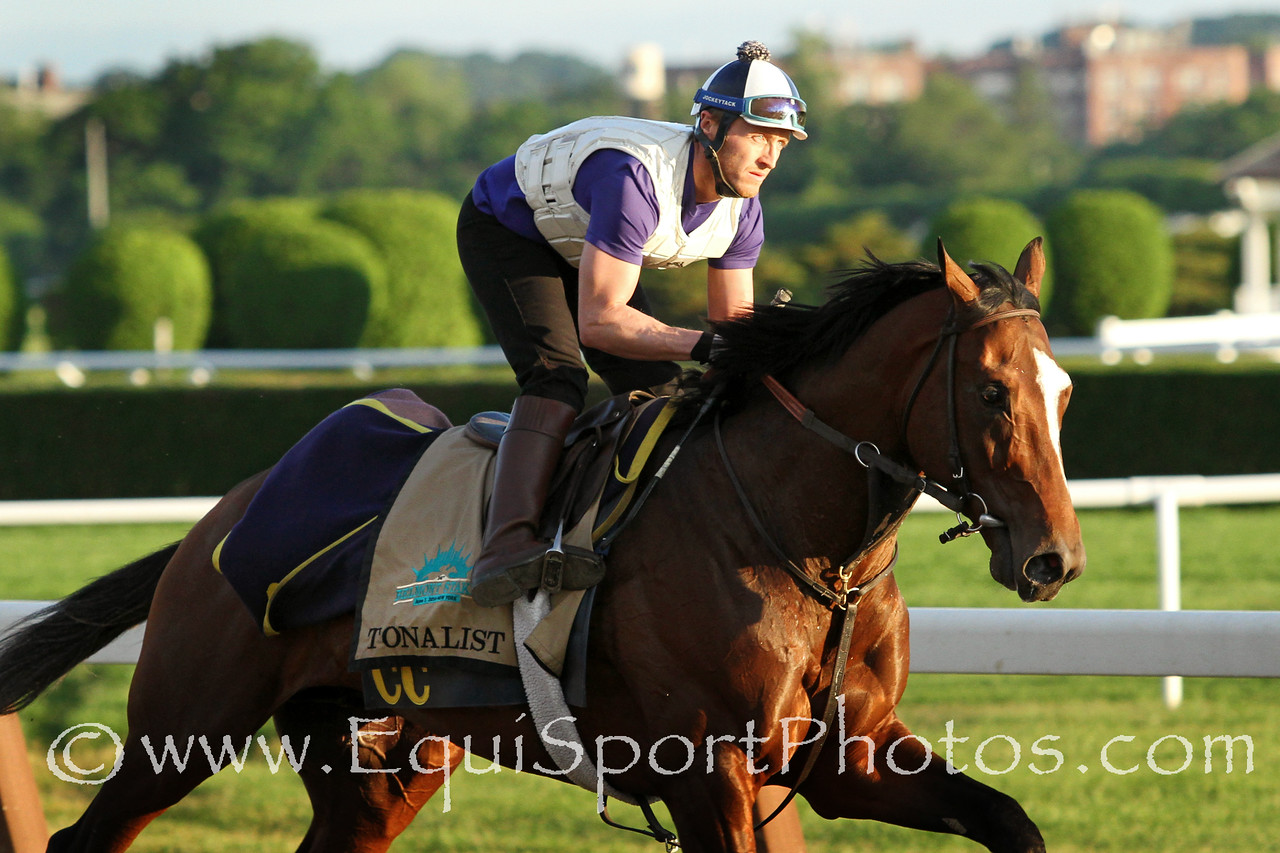 Tonalist (Tapit) trains for the Belmont Stakes (Gr I) at Belmont Park 6/6/14. Trainer: Christophe Clement. Owner: Robert S. Evans
