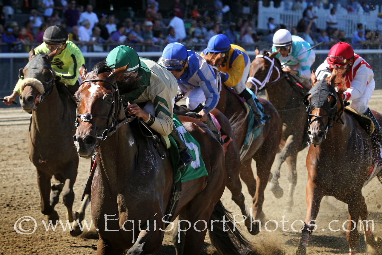 Noble Cornerstone (Noble Causeway) and jockey Jose Ortiz win an allowance at Belmont Park 9/27/14. Trainer: Tom Morley Owner: My Meadowview Farm