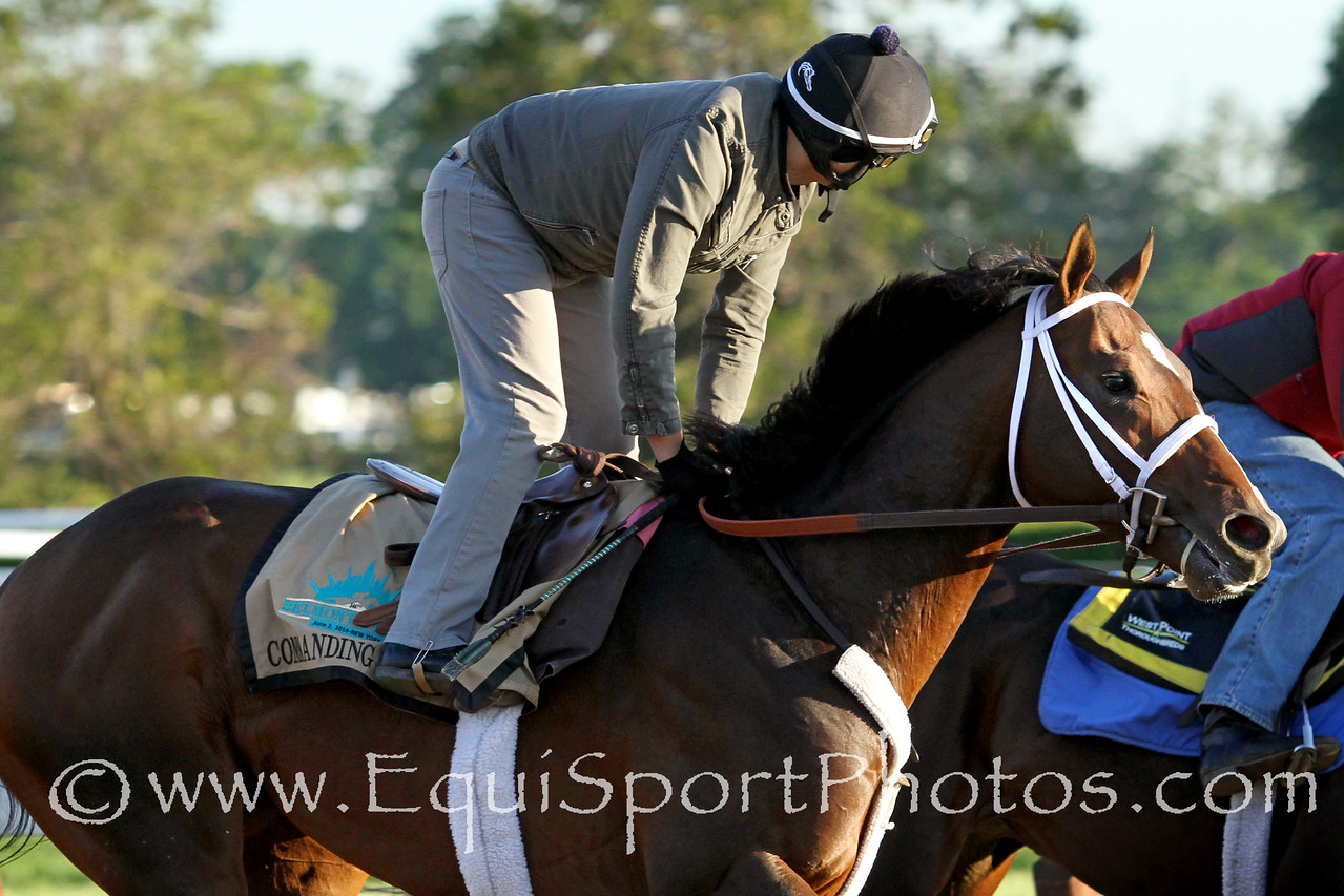 Commanding Curve (Master Command) trains for the Belmont Stakes (Gr I) at Belmont Park 6/1/14. Trainer: Dallas Stewart. Owner: West Point Thoroughbreds