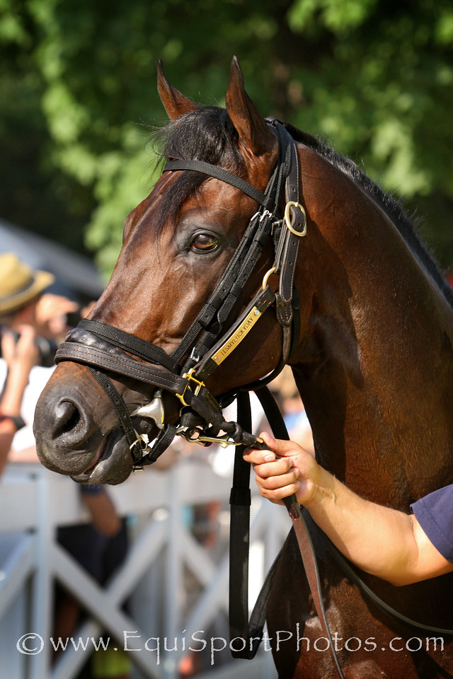 Itsmyluckyday (Lawyer Ron) before the Whitney (Gr I) at Saratoga Racecourse 8/2/14. Trainer: Eddie Plesa. Owner: Trilogy Stable & Plesa