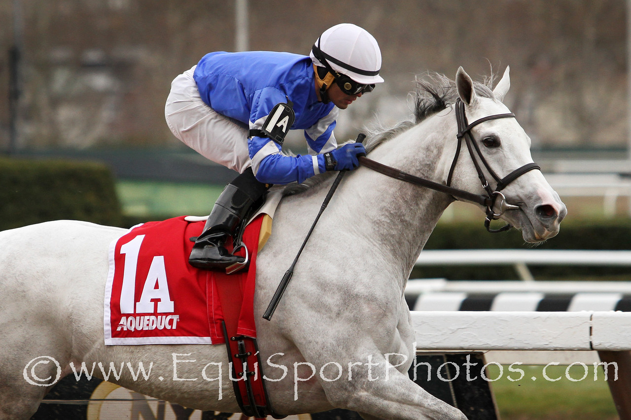 Snowbell (Tapit) and jockey Luis Saez win the Comely (Gr III) at Aqueduct Racetrack 11/29/14. Trainer: Tom Albertrani. Owner: Godolphin Stable