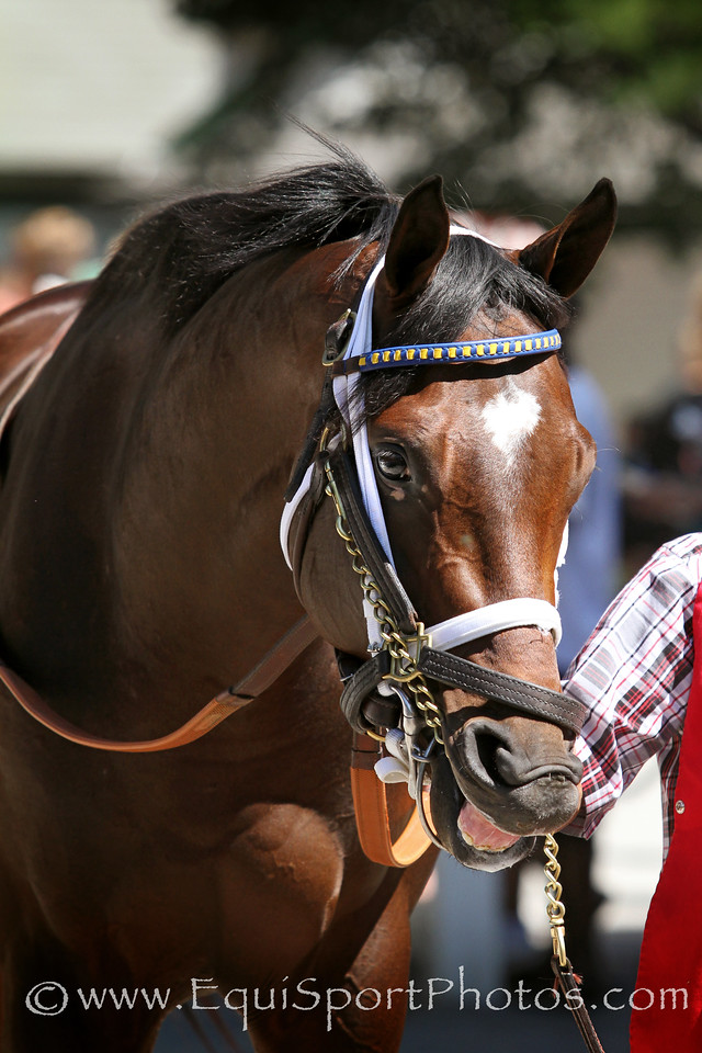 Da Jenius (Malibu Moon) before a MSW at Saratoga Racecourse 8/30/14. Trainer: Eric Guillot. Owner: Southern Equine Stables