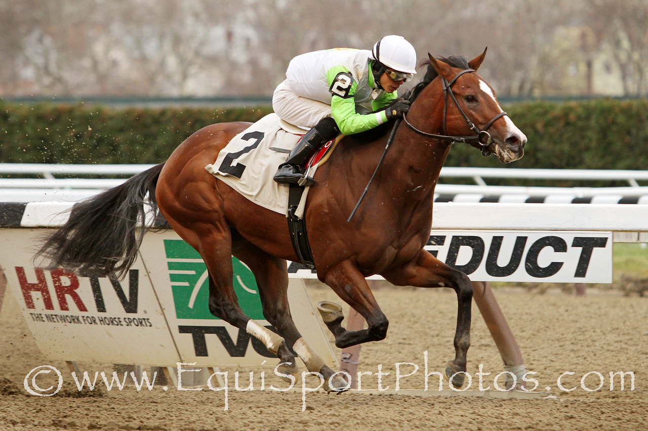 Ship Disturber (Sky Mesa) and jockey Jose Ortiz win a MSW at Aqueduct Racetrack 11/29/14. Trainer: Rick Violette. Owner: The Elkstone Group