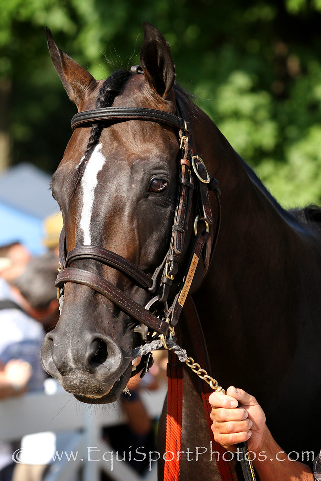 Prayer for Relief (Jump Start) before the Whitney (Gr I) at Saratoga Racecourse 8/2/14. Trainer: Dale Romans. Owner: Zayat Stables