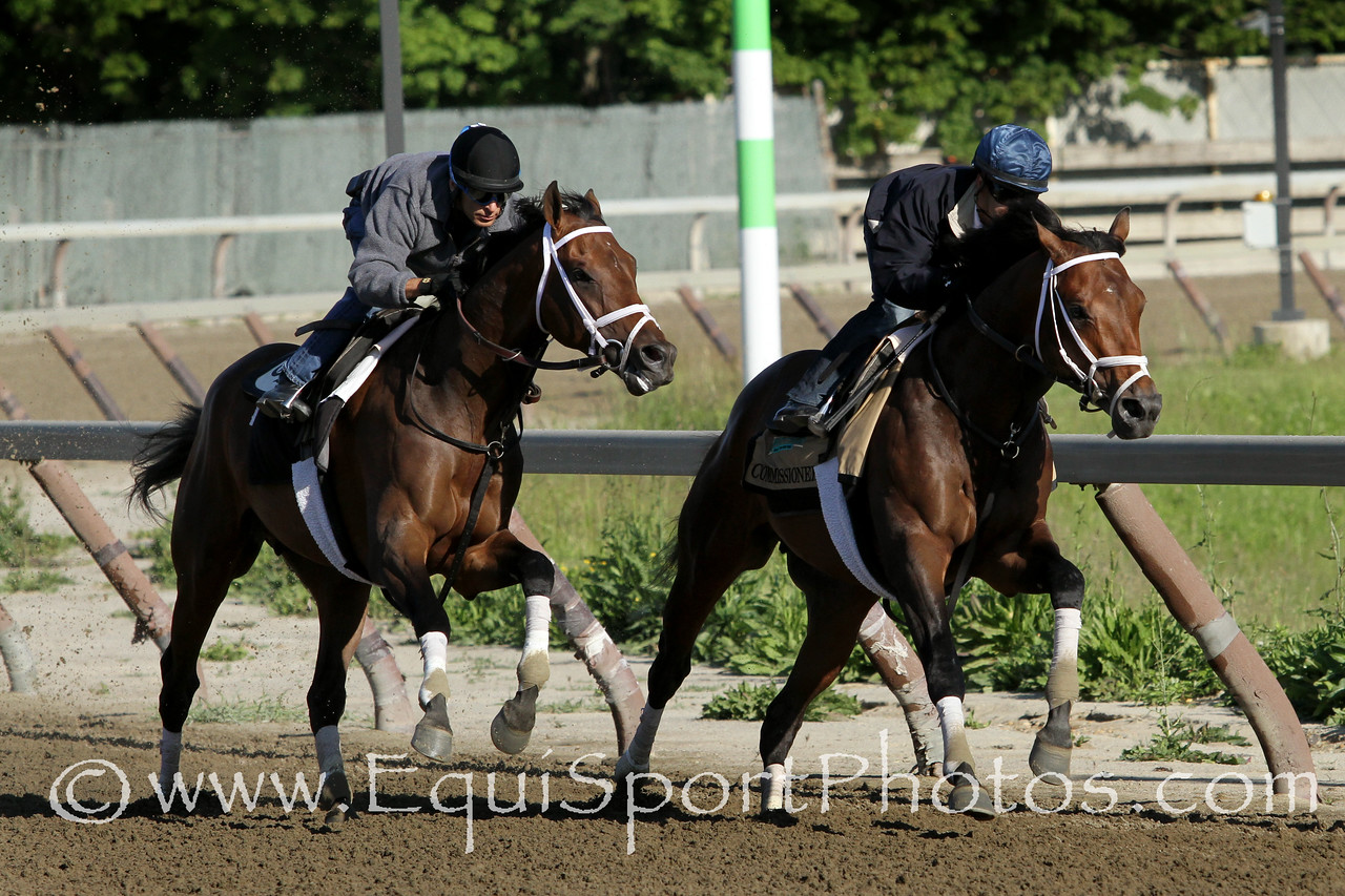 Commissioner (A. P. Indy) (inside) and Matterhorn (Tapit) with Javier Castellano and John Velazquez respectively train for the Belmont Stakes (Gr I) at Belmont Park 6/1/14. Trainer: Todd Pletcher. Owners: WinStar Farm & Michael B. Tabor
