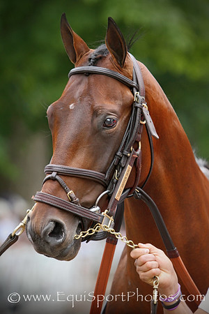 Can't Happen Here (Desert Party) before a MSW at Saratoga Racecourse 8/16/14. Trainer: Chad Brown. Owner: Klaravich Stables