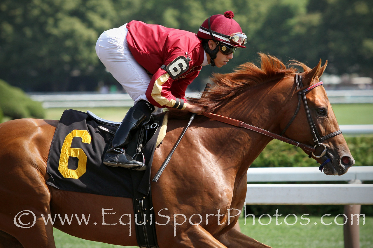 Pride of Stride (Candy Ride) and jockey Irad Ortiz Jr. win a MSW at Saratoga Racecourse 8/2/14. Trainer: Graham Motion. Owner: Qatar Racing