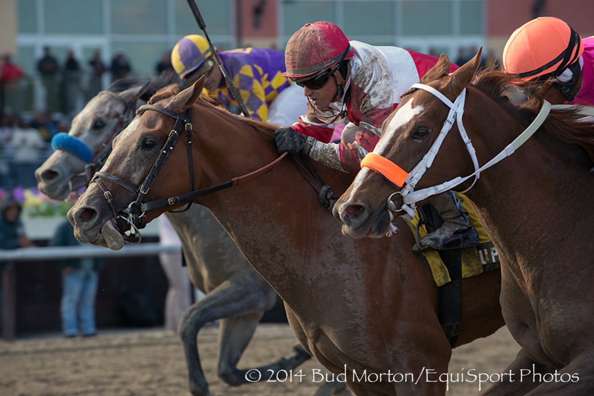 Coup de Grace (Tapit) and jockey Javier Castellano win The (Gr.III) Bay Shore at Aqueduct 04/05/14 Trainer: Chad C Brown  Owner :Fox Hill Farmi.  Bud Morton/ Equisport Photo