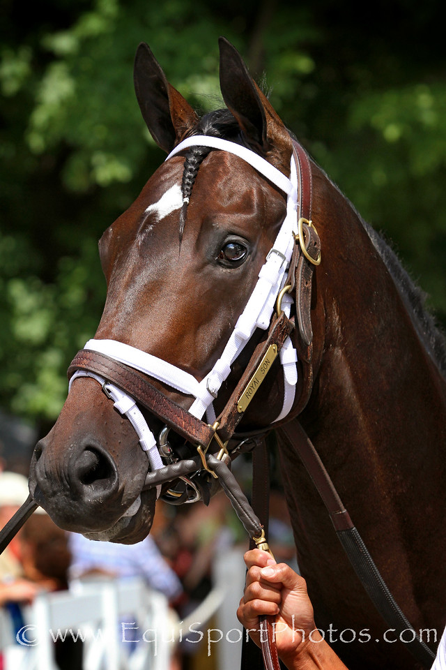 Royal Son (Tiznow) before a MSW at Saratoga Racecourse 8/2/14. Trainer: Todd Pletcher. Owner: WinStar Farm