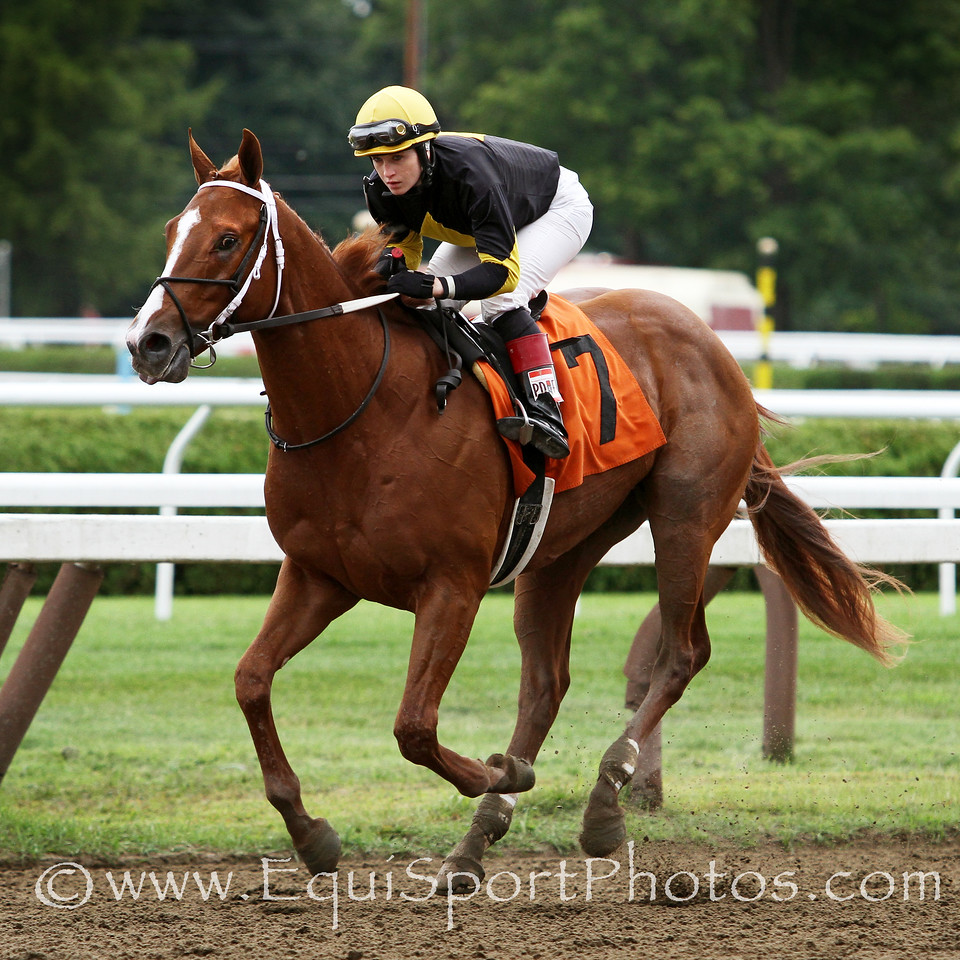 Bold Conquest (Curlin) and jockey Rosie Napravnik win a MSW at Saratoga Racecourse 8/16/14. Trainer: Steven Asmussen. Owner: Ackerley Brothers Farm