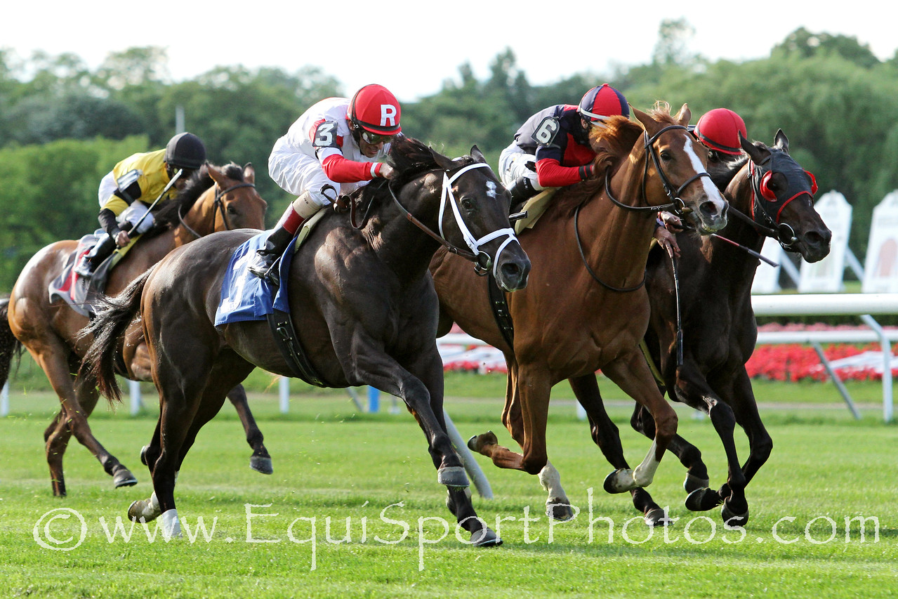 Charming Kitten (Kitten's Joy) and jockey John Velazquez win the Belmont Gold Cup Invitational at Belmont Park 6/6/14. Trainer: Todd Pletcher. Owner: Kenneth & Sarah Ramsey