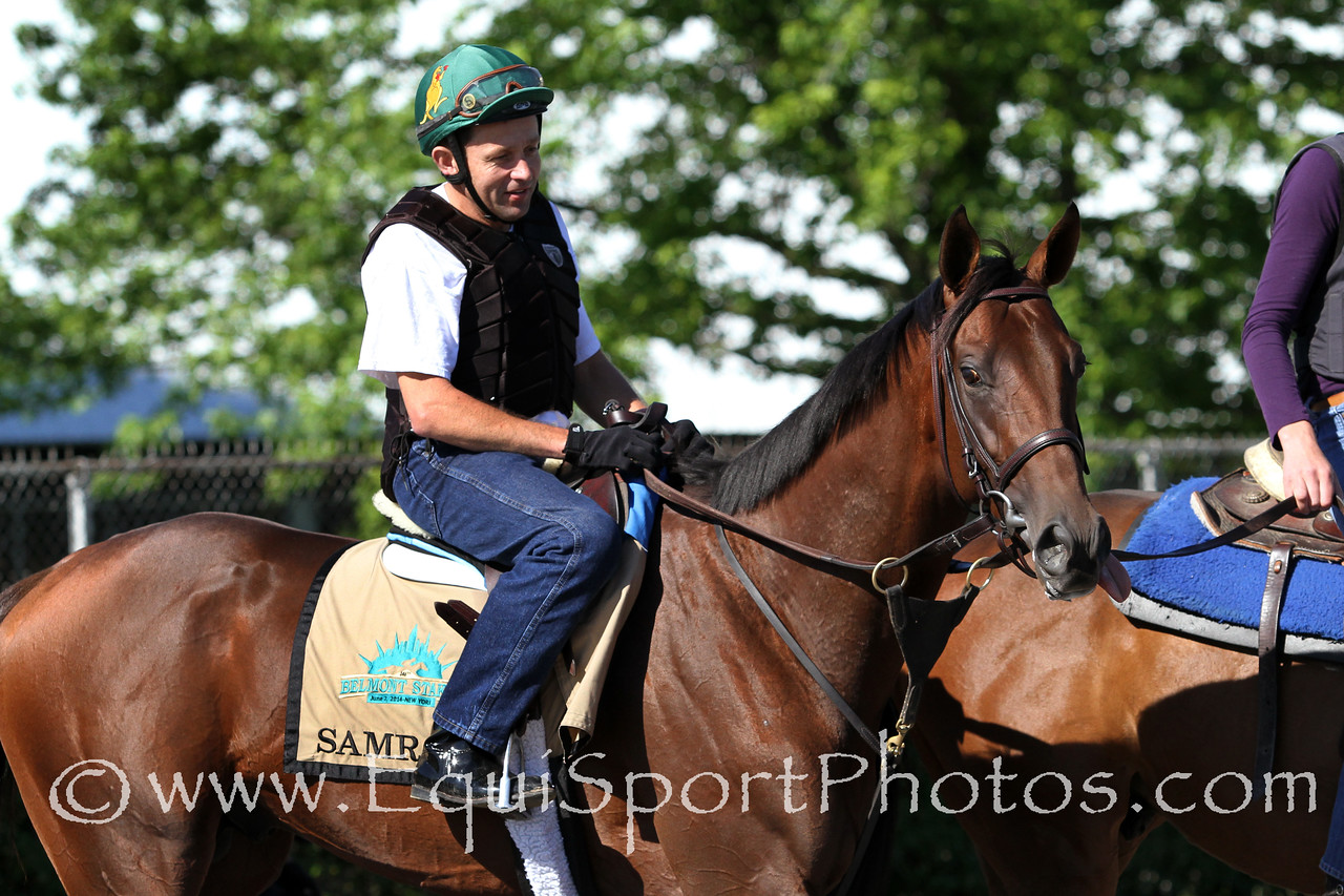 Samraat (Noble Causeway) trains for the Belmont Stakes (Gr I) at Belmont Park 6/6/14. Trainer: Rick Violette. Owner: My Meadowview Farms