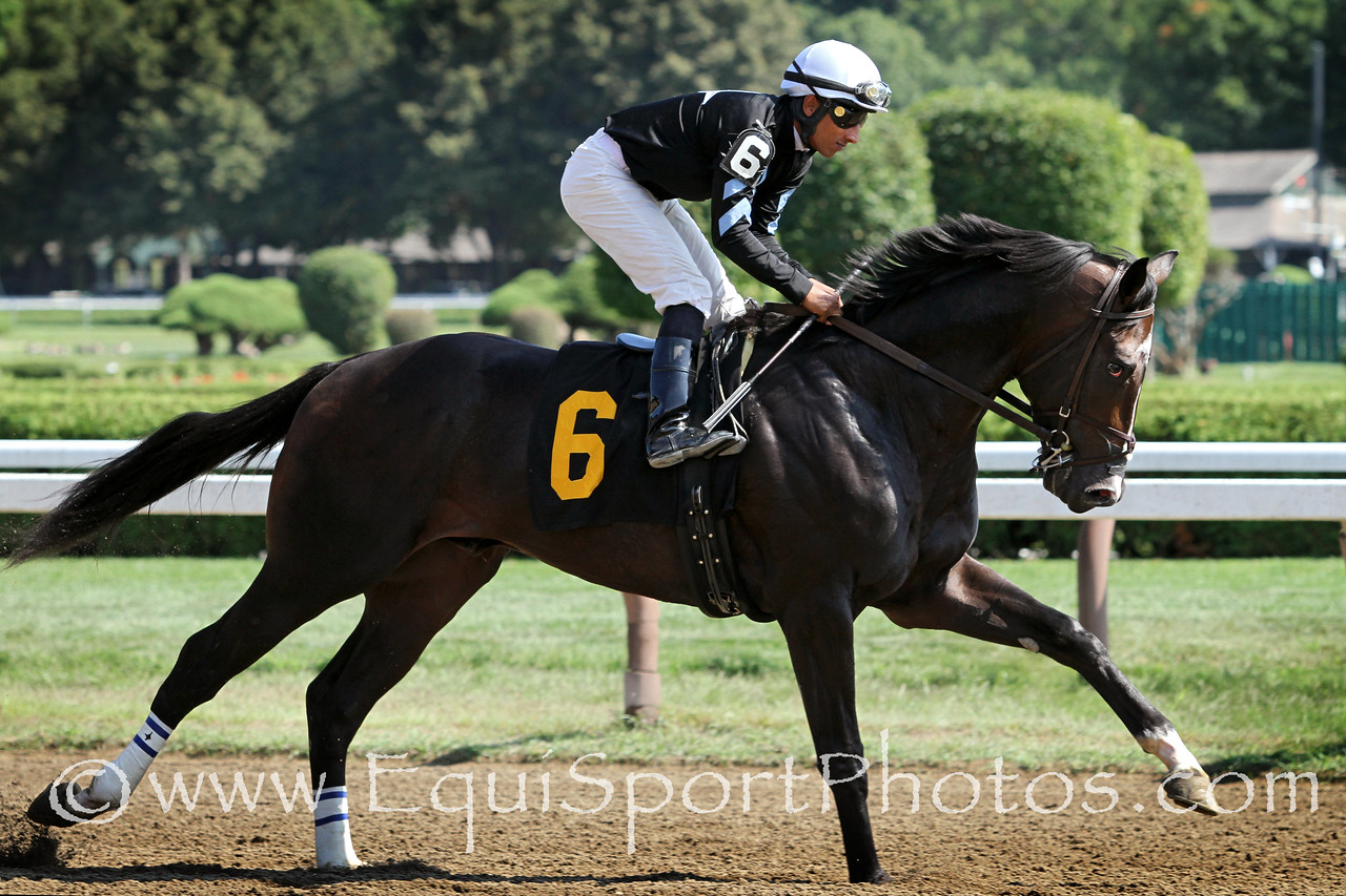 Enjoy the Show (Jump Start) and jockey Rajiv Maragh before a MSW at Saratoga Racecourse 8/30/14. Trainer: J.J. Toner. Owner: Ninety North Racing Stable