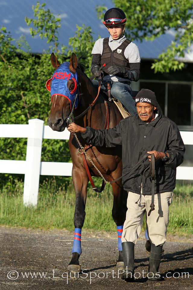 Social Inclusion (Pioneerof the Nile) trains for the Belmont Stakes (Gr I) at Belmont Park 5/31/14. Trainer: Manuel J. Azpurua. Owner: Rontos Racing Stable Corp.
