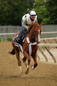 Frammento (Midshipman) trains for the Belmont Stakes (Gr 1) at Belmont Park 6/5/15. Trainer: Nick Zito. Owner: Joseph H. Moss