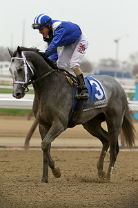 Mohaymen (Tapit) and jockey Junior Alvarado win the Remsen (Gr II) at Aqueduct Racetrack 11/28/15. Trainer: Kiaran McLaughlin. Owner: Shadwell Stable