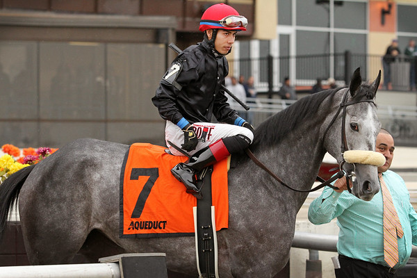 Carrumba (Bernardini) and jockey Jose Ortiz before the Comely (Gr III) at Aqueduct Racetrack 11/28/15. Trainer: Shug McGaughey. Owner: Phipps Stable