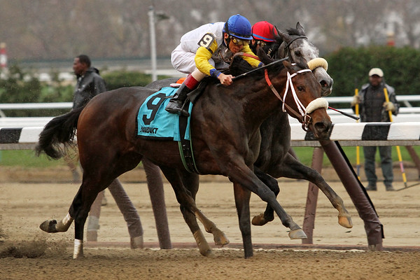 Forever Unbridled (Unbridled's Song) and jockey John Velazquez win the Comely (Gr III) at Aqueduct Racetrack 11/28/15. Trainer: Dallas Stewart. Owner: Charles Fipke