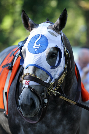 Frosted (Tapit) before the Jim Dandy (Gr II) at Saratoga Racecourse 8/1/15. Trainer: Kieran McLaughlin. Owner: Godolphin Stable