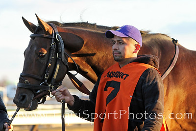 Connect (Curlin) and jockey Javier Castellano win the Cigar Mile (Gr I) at Aqueduct Racetrack 11/26/16. Trainer: Chad Brown. Owner: Paul Pompa Jr.