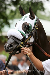 Highland Sky (Sky Mesa) before the Belmont Derby Invitational (Gr I) at Belmont Park 7/9/16. Trainer: Barclay Tagg. Owner: Joyce B. Young & Gerald McManis