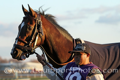 Divining Rod (Tapit) before the Cigar Mile (Gr I) at Aqueduct Racetrack 11/26/16. Trainer: Arnaud Delacour. Owner: Lael Stable