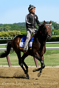 Exaggerator (Curlin) trains for the Belmont Stakes (Gr I) at Belmont Park 6/10/16. Trainer: Keith Desormeaux. Owner: Big Chief Racing, LLC