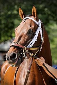 Takaful (Bernardini) before the H. Allen Jerkens (Gr I) at Saratoga Racecourse 8/26/17. Trainer: Kiaran McLaughlin. Owner: Shadwell Stable
