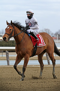 Miss Brazil (Palace Malice) and jockey Eric Cancel after the Busher Invitational at Aqueduct Racetrack 3/6/21. Trainer: Tony Dutrow. Owner: Team D and Madaket Stables LLC
