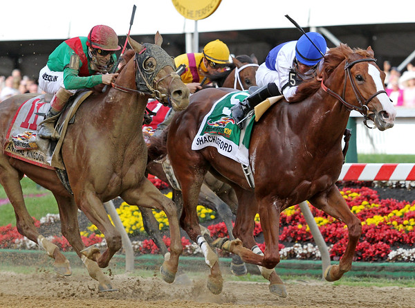 Shackleford (Foresty) and jockey Jesus Castanon win the Preakness Stakes (Gr. I) at Pimlico Raceocourse 5/21/11. Dale Romans trainer, Michael Lauffer and W.D. Cubbedge owners JH.