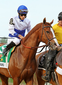 Shackleford (Foresty) and jockey Jesus Castanon go to post for the Preakness Stakes (Gr. I) at Pimlico Racecourse 5/21/11. Dale Romans trainer, Michael Lauffer and W.D. Cubbedge owners JH.