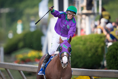California Chrome (Lucky Pulpit) wins the Preakness Stakes at Pimlico on 5.17.2014. Victor Espinoza up, Art Sherman trainer, Dumb Ass Partner (Steven Coburn and Perry Martin) owners.p3